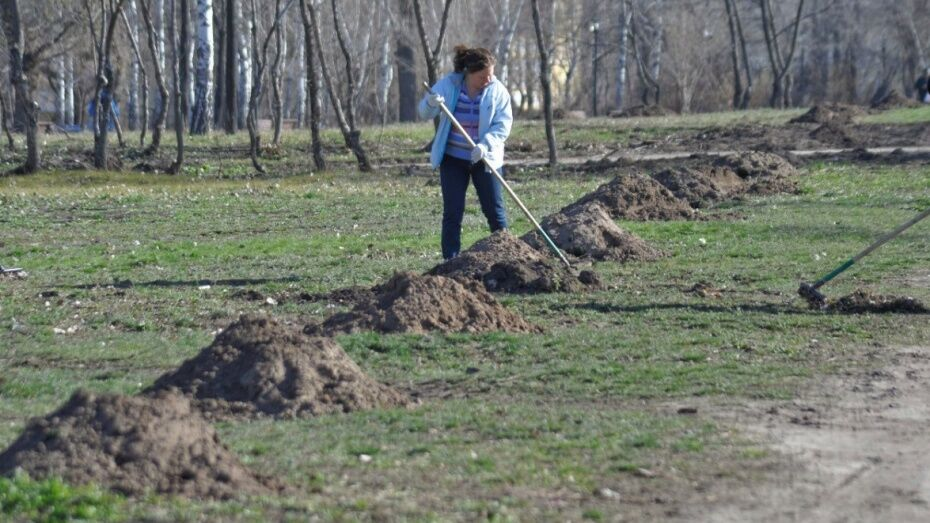 Воронежцев позвали на уборку леса в Коминтерновском районе