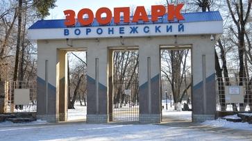 У воронежского зоопарка появится филиал в Воробьевском районе