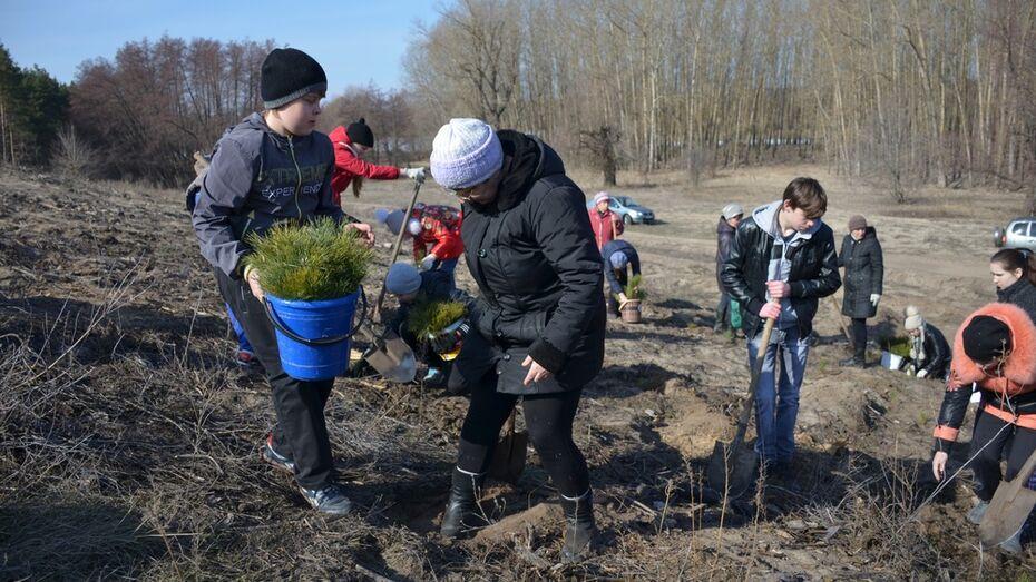 В Верхнемамонском районе стартовал национальный проект «Лес Победы»