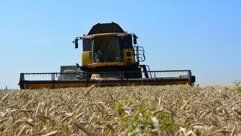В Россошанском районе собрали рекордный урожай пшеницы