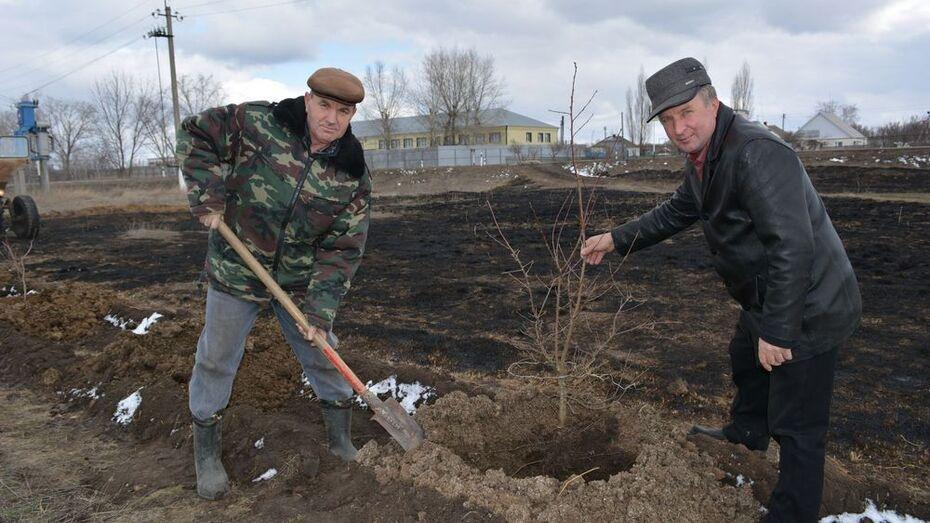 Воробьевцы начали высаживать «Лес Победы»