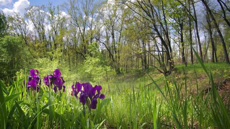 Воронежские флористы создали Кадастр редких видов сосудистых растений
