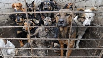 В Воронежской области рецидивист убил и съел собаку