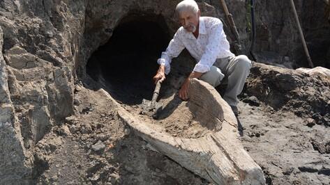 В Богучарском районе нашли древнюю лодку-долбленку