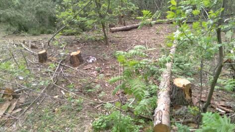Воронежцы обеспокоились вырубкой деревьев в лесопарке Оптимистов