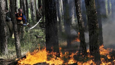 Общая площадь 3 крупных пожаров в Воронежской области превысила 350 га