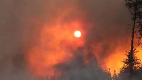 Аномально жаркий сентябрь принес Воронежской области 865 ландшафтных пожаров