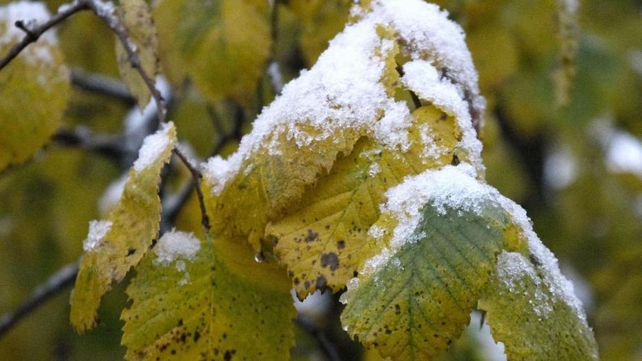 Первый снег в Воронежской области может выпасть в выходные
