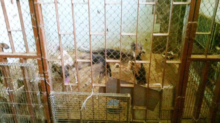 Прокуратура Центрального района проводит проверку по обращению об издевательствах над животными во ВГАУ