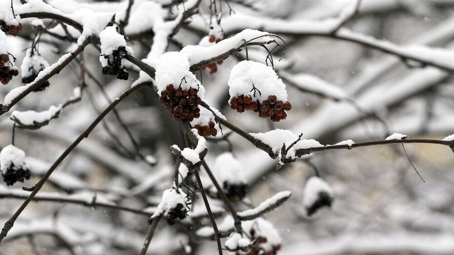 Самой снежной точкой на карте Воронежской области стал Борисоглебск
