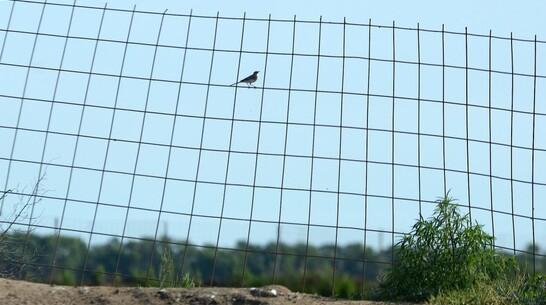 Проверка не подтвердила факты вольерной охоты в Воронежской области
