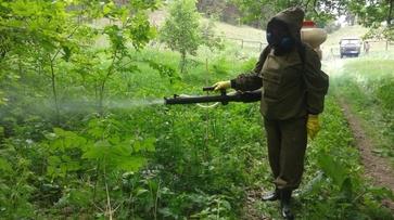В Павловске Воронежской области за выходные от комаров обработают 46,5 га
