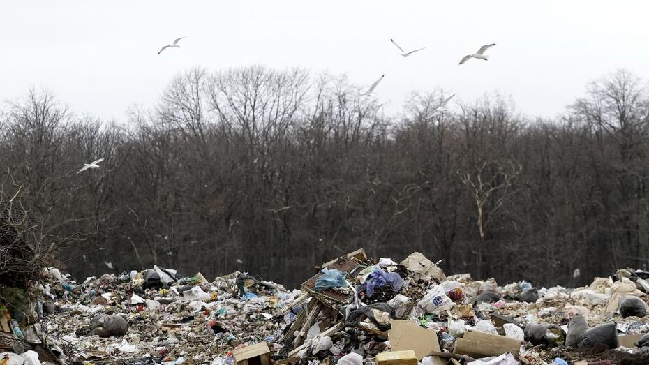 Росприроднадзор раскритиковал мусорный полигон в Воронежской области