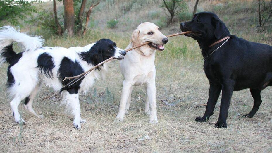Мэрия Воронежа попытается привлечь софинансирование для создания приюта для животных