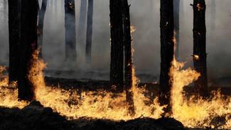 Два крупных пожара подбираются к воронежским селам