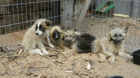 Воронежские волонтеры попросили помощи в передержке бродячих собак