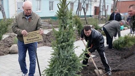 Под Воронежем появились аллеи в честь ветеранов