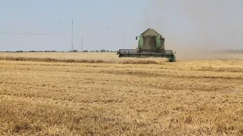 В Хохольском районе закончилась уборка зерновых