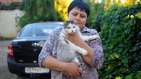 В Воронежской области кошка-верхолазка Пушуня вернулась домой