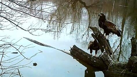 Дерево-магнит для птиц и зверей нашли в заповеднике в Воронежской области