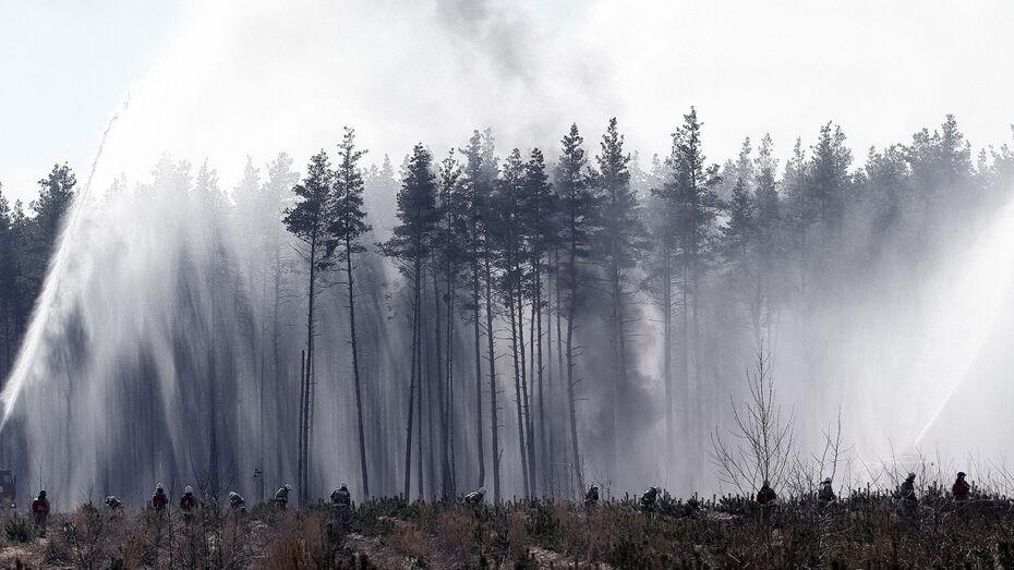 Крупный лесной пожар потушили в Воронежской области