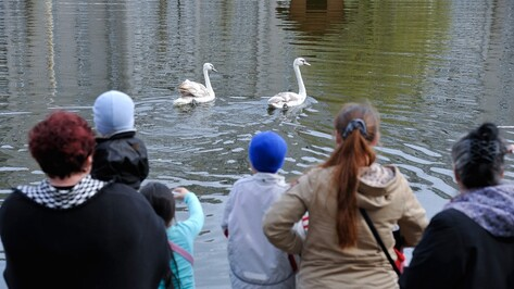 В Воронеже с озера на Минской улетел брошенный подругой лебедь