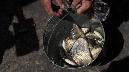 Воронежца оштрафовали на 300 тыс рублей за ловлю рыбы в водохранилище