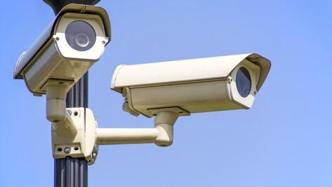 В Северном лесу Воронежа появятся камеры