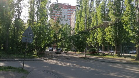 Упавшее дерево заблокировало дорогу на левом берегу в Воронеже