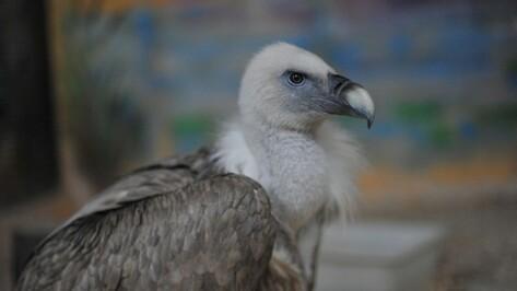Новые птицы появятся в Воронежском зоопарке летом 2017 года