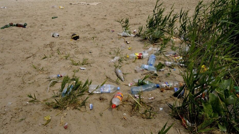 Воронежцев пригласили на уборку берега водохранилища 26 мая