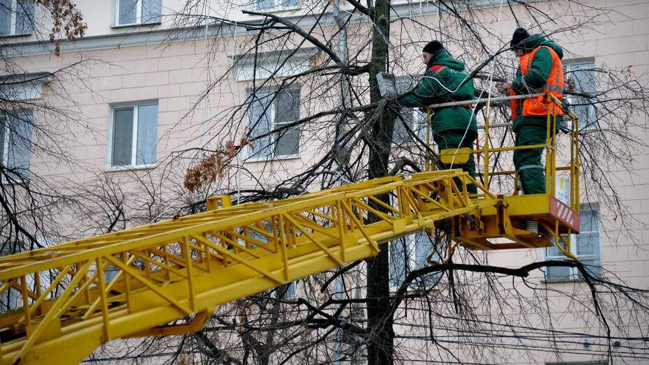 Воронежские власти спилят вязы и посадят липы на Кольцовском бульваре
