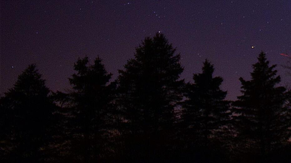 Ночные работы в Северном лесопарке смутили воронежцев