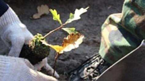 Воронежцы посадили семь тысяч молодых дубов