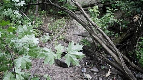 В деле об убийстве Кати Череповецкой в воронежском парке появились ДНК 2 мужчин