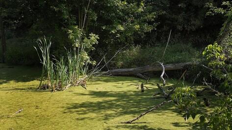 Экологи рассказали, чем грозит обмеление рек в Воронежской области