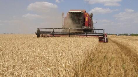 В Поворинском районе приступили к уборке зерновых