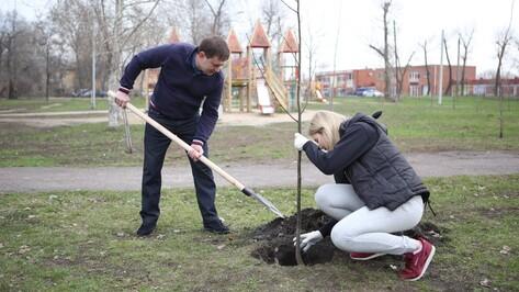 Председатель Воронежской облдумы принял участие в общегородском субботнике