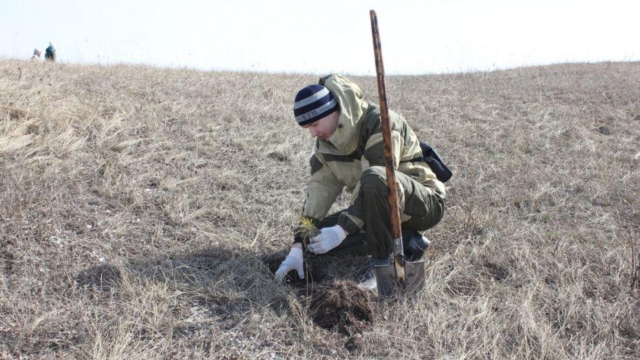 В хохольском селе Костенки высадили «Аллею памяти»