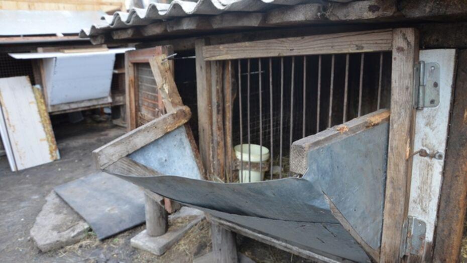 В Павловском районе неизвестное животное снова напало на домашних кроликов