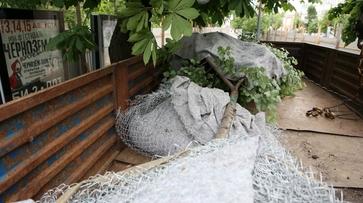 Липы из центра Воронежа переехали к памятнику Славы