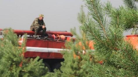 Под наблюдение видеокамер попадут 90% лесов Воронежской области