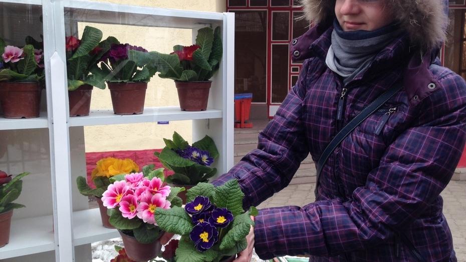 Воронежские цветочники предложили заменить букеты роз на 8 марта цветами в горшках