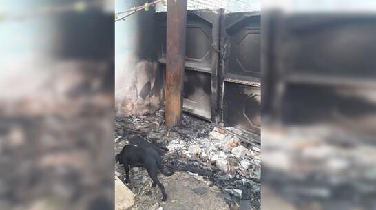 Неизвестные сожгли будки для бездомных собак в Павловске