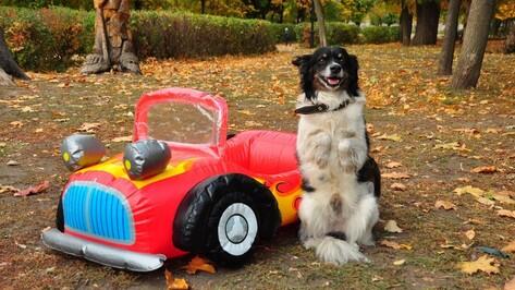 В Воронеже дрессированная дворняга соберет пожертвования для бездомных собак