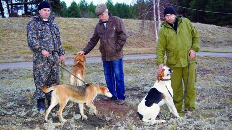 В Калаче прошли полевые испытания охотничьих собак