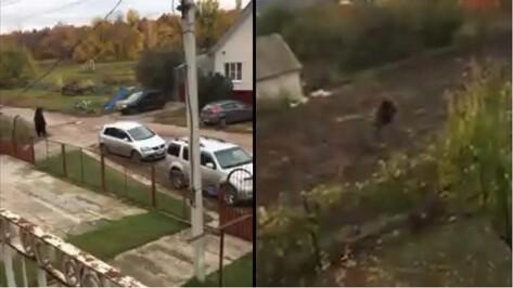 Внук убитого медведем пенсионера разместил видео обезвреживания хищника под Воронежем