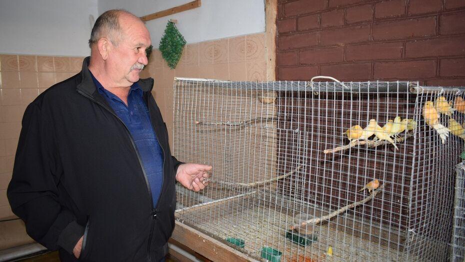 Пенсионер из грибановского села Алексеевка разводит дома канареек