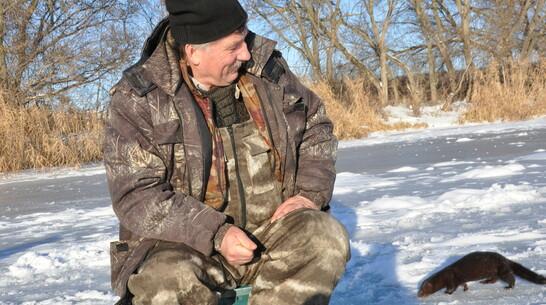 Норки повадились к репьевским любителям зимней рыбалки за уловом