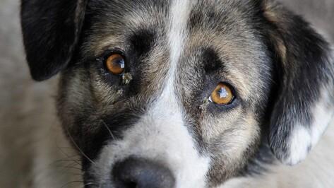 В Воронеже в 2016 году усыпили 315 собак
